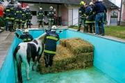 Pferd in Pool gestürzt