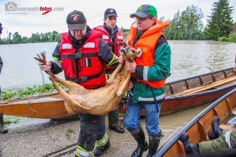 Hochwasser2013_110
