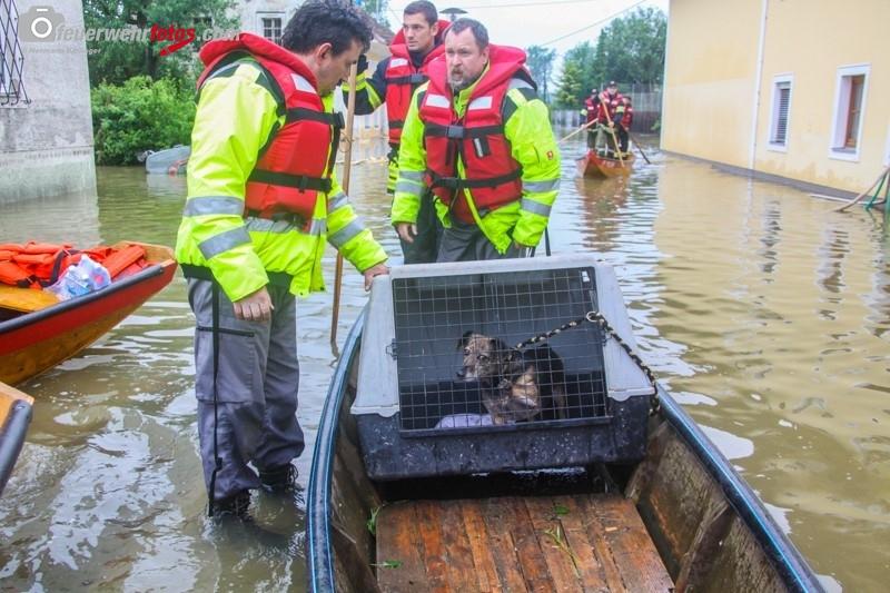Hochwasser2013_315