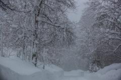 SchneeRosenau130119_Kollinger-56